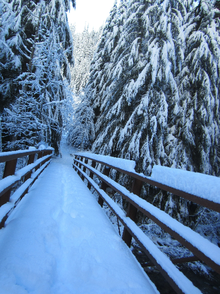 Bridge over Glacier Creek